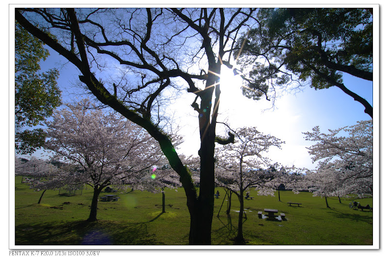 2012-日本關西-春櫻