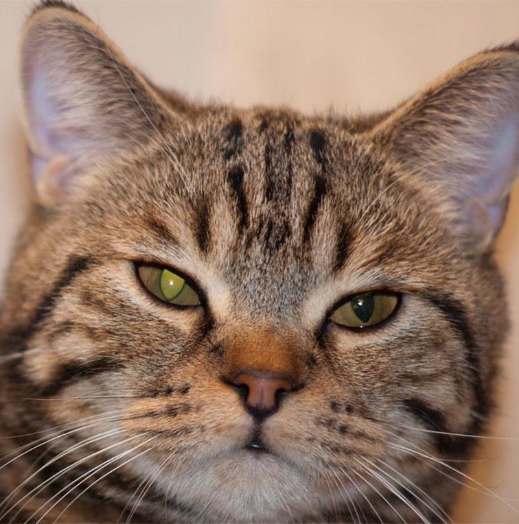 У кота не сужается один зрачок