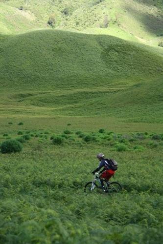 Gambar ini menggambarkan betapa hijaunya padang rumput yang ada di Bromo.