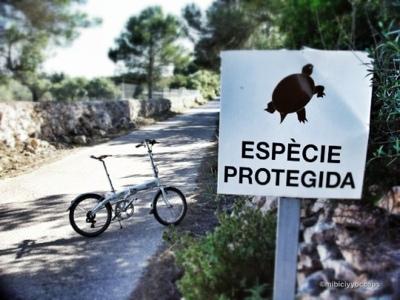 Cartel tortuga y dahon eco3