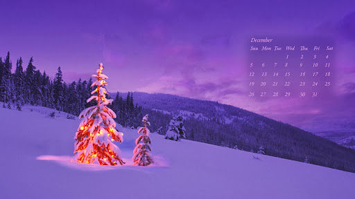 Christmas Tree, December 2010.jpg