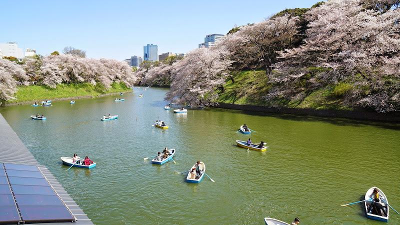 千鳥ヶ淵 桜 写真13