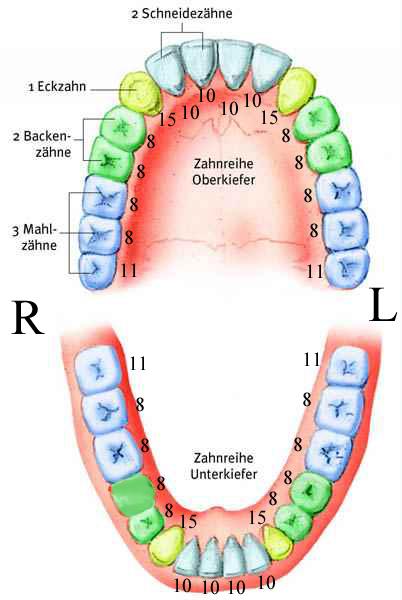 Energiearbeit: Zusammenhang Zähne und Organ Gesundheit
