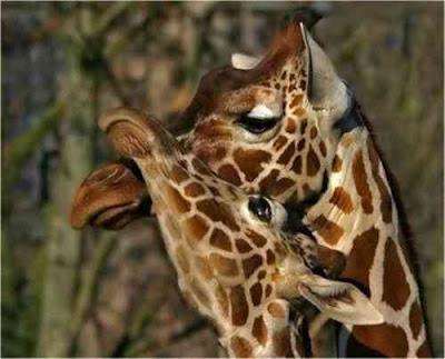 hewan lucu jatuh cinta