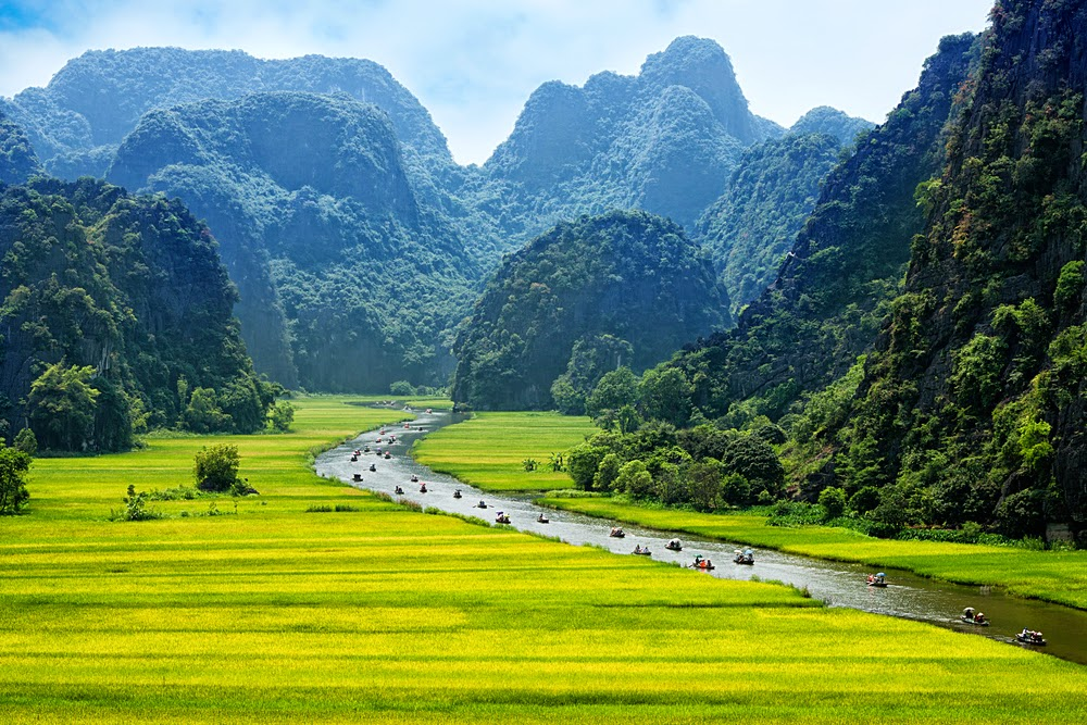 Rice field, Ninh Binh, Vietnam
