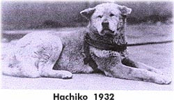 Mi perro fiel, una historia para reflexionar
