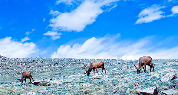 Bibliography - Alpine Tundra