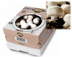 kit-culture-champignons-de-paris-enfant