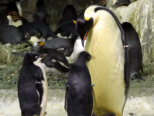 https://lh5.googleusercontent.com/-vIz9yzqteBw/Twtipv1XN5I/AAAAAAAAAGg/7_66hFFOMGI/s640/penguins.jpg