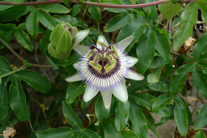 kwiatek nr 4