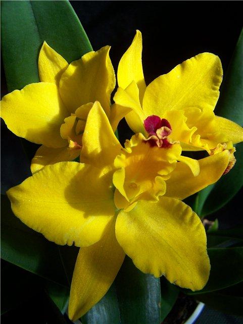 Растения из Тюмени. Краткий обзор - Страница 10 0217cd907097