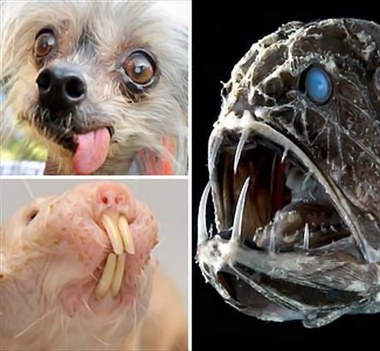 Daily Beeper | Daily News About Celebrities,Fashion ... Ugliest Animals In The World