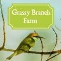 Grassy Branch Farm