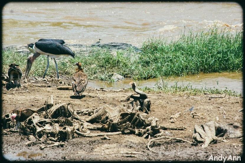Сафари: Кения и Танзания. Тупо много фото.