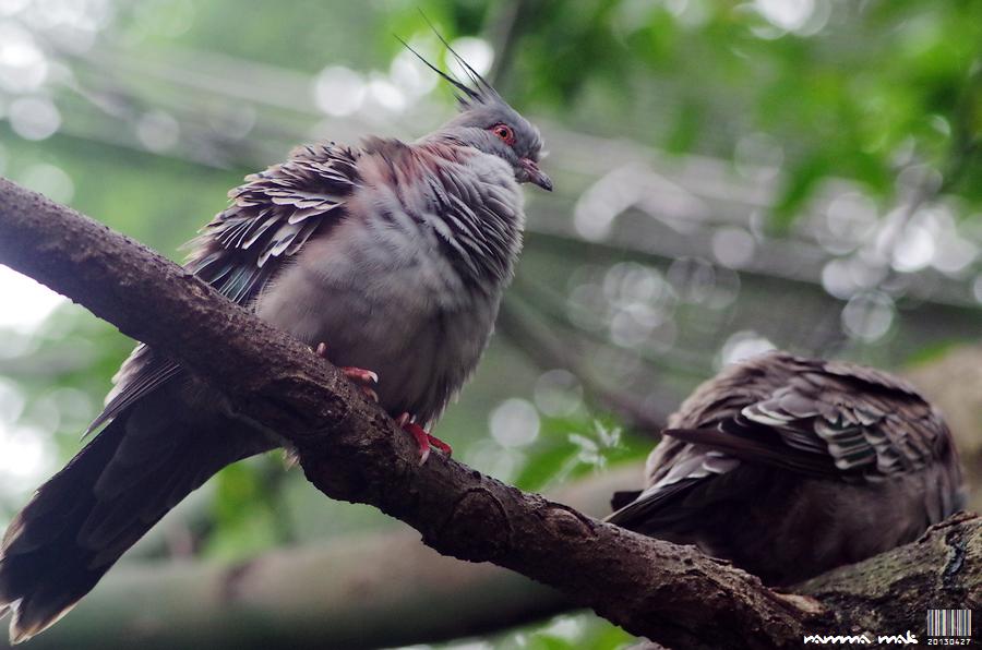 神秘鳥的真貌!