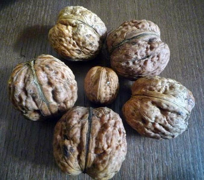 Яцек орех