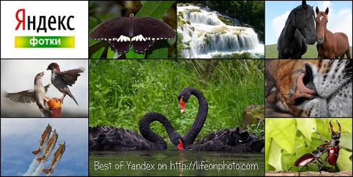 Лучшие фотографии с Яндекса за неделю.
