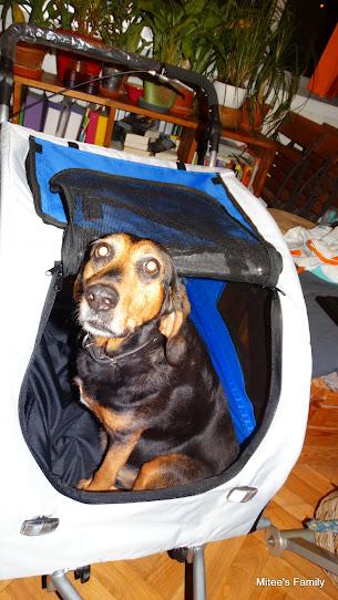Modes de transport pour petits / vieux chiens qui fatiguent vite - Page 3 DSC02408