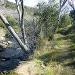 Walking beside the Thredbo River (274208)