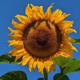 Karin Scholz Photo 14