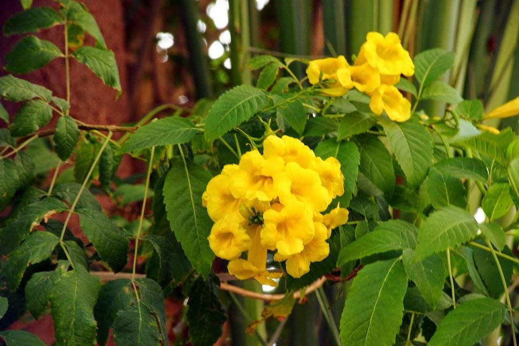 gardenia?,,? DSC02940