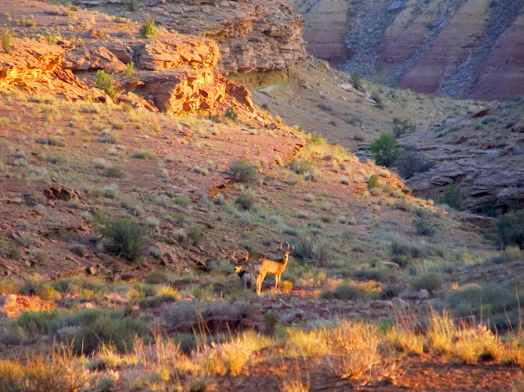 Two bucks heading toward the river at sunset