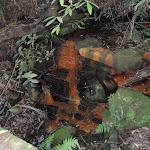 A trough in Kobardo Brook (173157)
