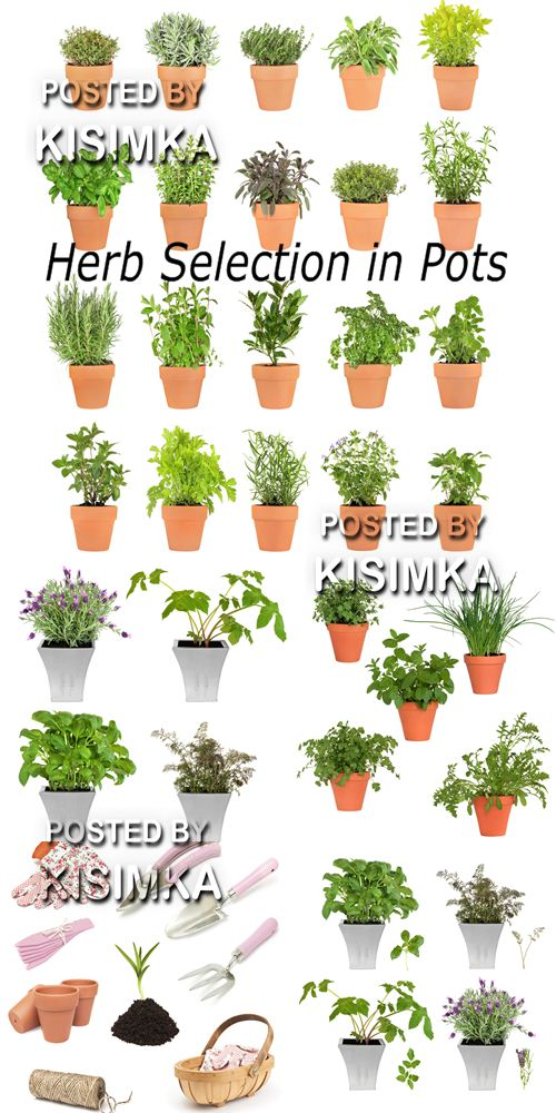 Stock Photo: Herb Selection in Pots