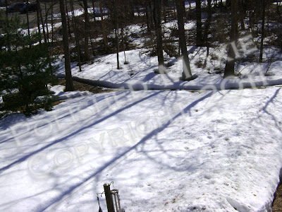 Picture of snowy backyard