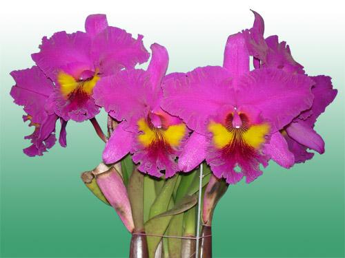 Растения из Тюмени. Краткий обзор - Страница 11 16