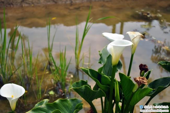 魔菇部落生態休閒農場生態池