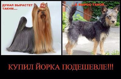 """Щенки подешевле или """"нам собаку для себя"""" 107392817"""