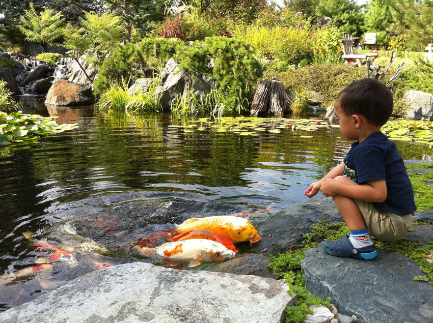 Aquascape your landscape the magic of kid friendly ponds for Keeping koi carp in a pond