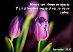 Proverbios 27.17