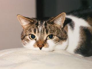 News animaliste marzo 2011 for Sfondi desktop gatti