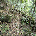 Dense forest heading south alongside Wollombi Brook (364751)