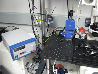 Piezo stack attatched by Ivan to the blue micromanipulator in Phil's lab