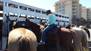 Happy Trails Walking Horses, LLC