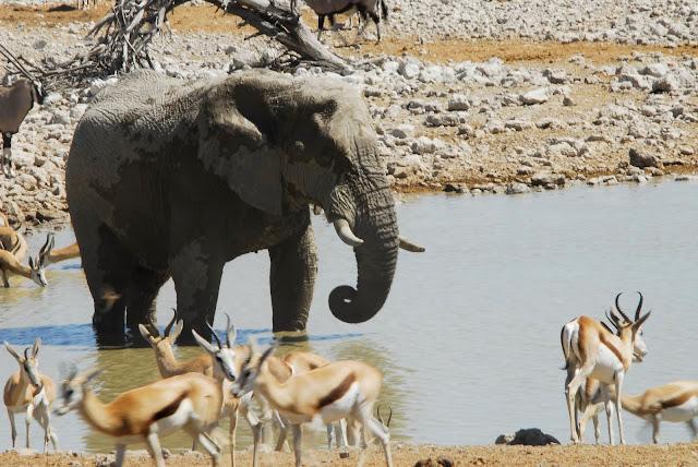 أفضل ما في أفريقيا  Best of Africa Namibia_180807114904