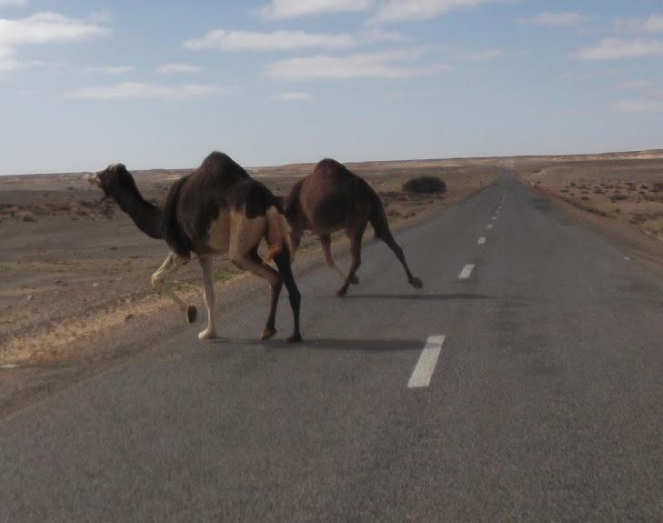 marrocos - Marrocos e Mauritãnia a Queimar Pneu e Gasolina - Página 10 DSCF1134