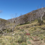 Walking along the Thredbo River Valley (83629)