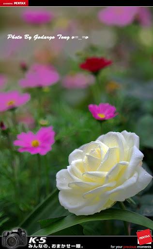 香港花卉展2012(一張流)