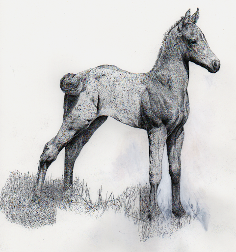 foal-2012-07-23-09-19.png