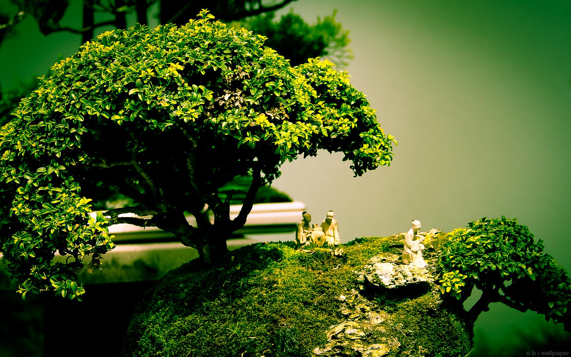 bonsai zen wallpaper