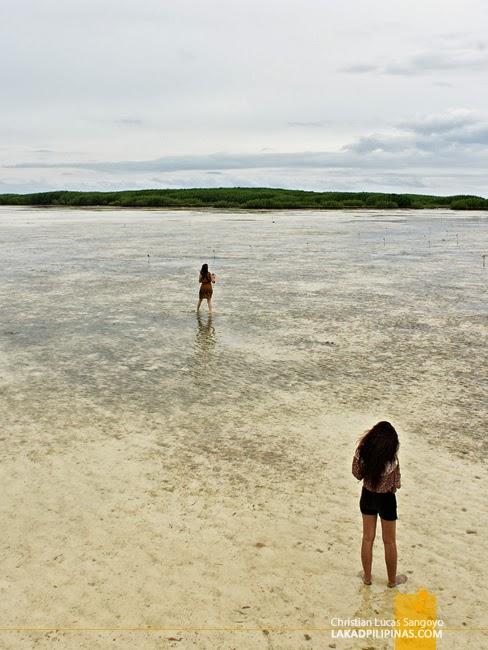 Getting Closer at Olango Island Wildlife Sanctuary in Cebu