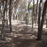 Track shaded by trees north of Saltwater Creek (105769)