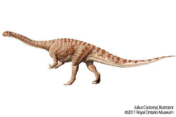 マッソスポンディルス - Massospondylus - JapaneseClass.jp