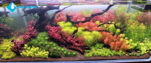 hồ thủy sinh theo phong cách hà lan 1