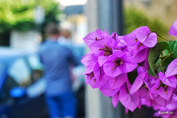 Эти цветы - повсюду!