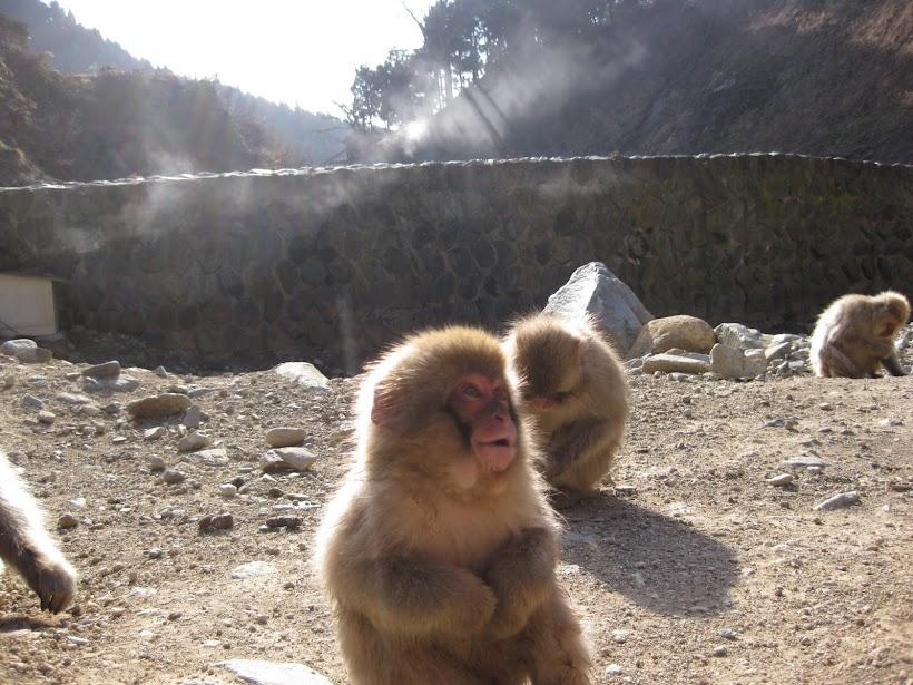 Monkeys sunbathing